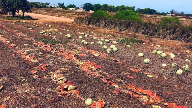 由于工人短缺,全国农作物损失登记册的农场门价值损失超过4500万美元