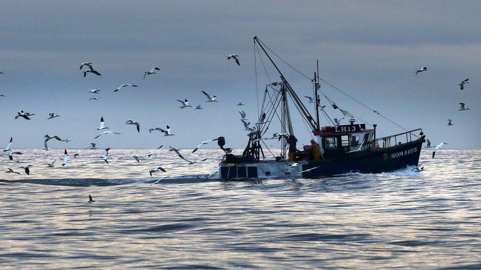 """英国脱欧:渔民在鱼类配额上""""吃亏"""""""