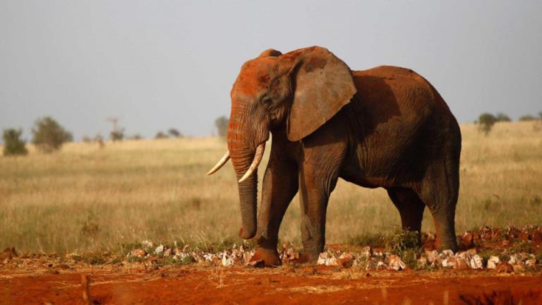 在南非,疑似犀牛偷猎者被大象踩踏致死