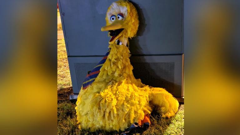 鸟在街上!马戏团找回了偷来的大鸟戏服