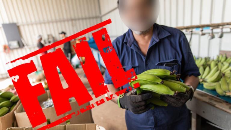 业内人士警告称,农业签证的变化将加深对园艺行业的剥削