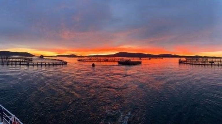 Andrew ' Twiggy ' Forrest购买塔斯马尼亚鲑鱼养殖巨头Huon水产养殖的股份