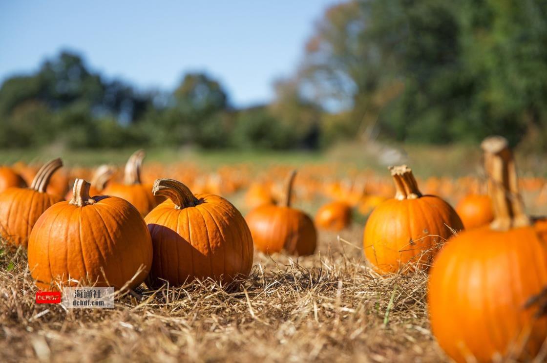 是南瓜的季节!秋季的3个食谱