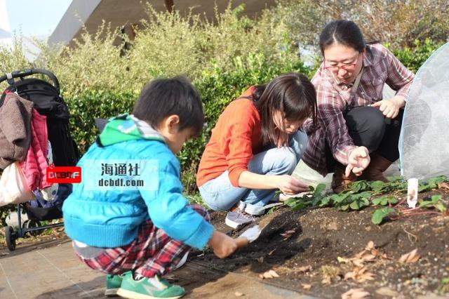 当你和邻居一起打理花园时,植物和人都会茁壮成长